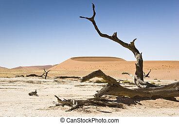 árbol muerto, y, duna