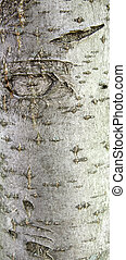 árbol, natural, grayish, rowan, colores, fondo marrón, verde, corteza