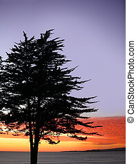 árbol, ocaso