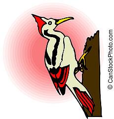 árbol., pájaro carpintero
