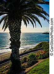 árbol, pacífico, parque, palma, heisler, océano, laguna, ...