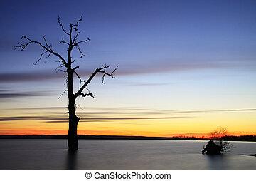 árbol, paisaje, viejo, lago, ocaso