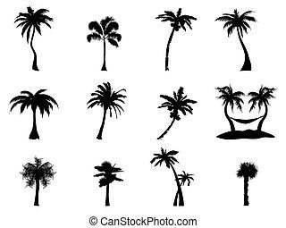 árbol, palma, silueta
