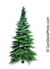 árbol, pino