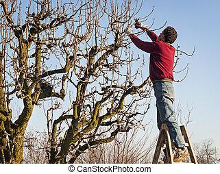 árbol, poda, hombre