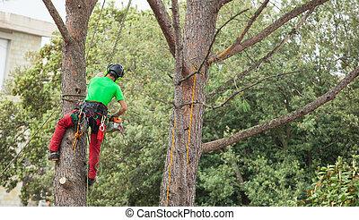 árbol., poda, pino, hombre