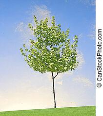 árbol, pradera