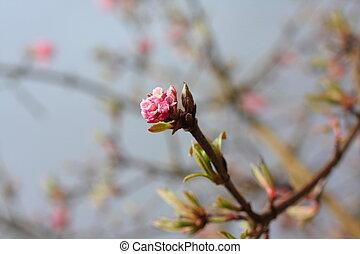 árbol, primavera