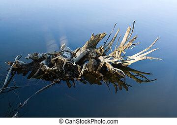 árbol, raíces, en el agua