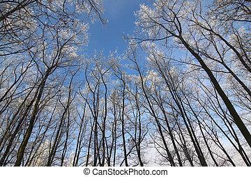 árbol, ramas, helado