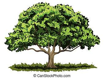 árbol, roble, grande