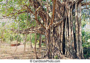 árbol, sagrado