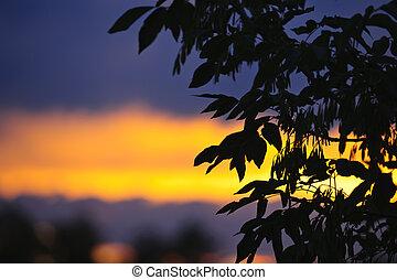 árbol, silueta, encima, ocaso
