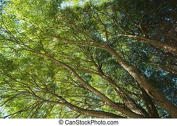 árbol, tapas