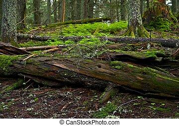 árbol, troncos, muerto