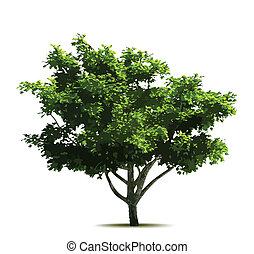 árbol., vector, verde