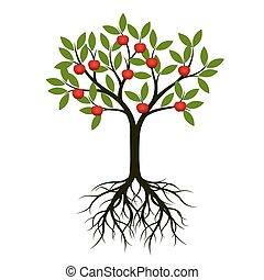 árbol verde, con, raíz, y, apple., vector, illustration.