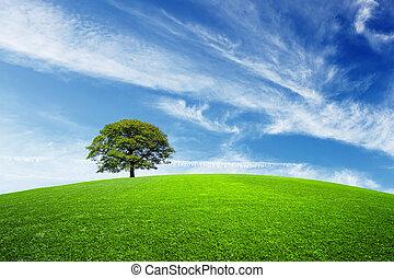 árbol verde, en, campo verde