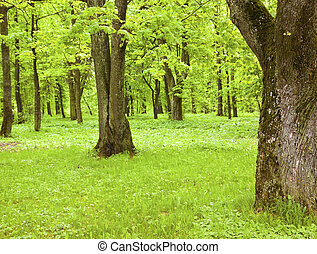árbol verde, en el parque