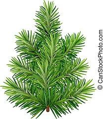 árbol verde, joven, navidad