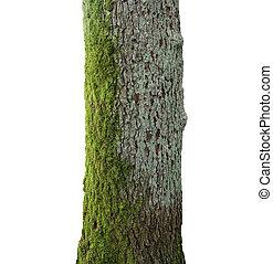 árbol, verde, musgo