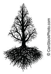 árbol viejo, raíz