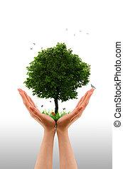 árbol, -, vivo, mano