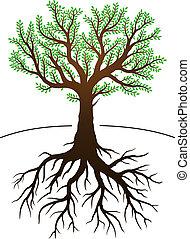 árbol, y, es, raíces