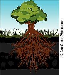 árbol, y, raíz, en, suelo
