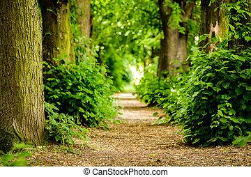 árboles, bosque, entre, senda, koblenz, germany.