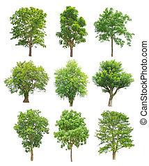 árboles, colección, aislado, blanco, plano de fondo