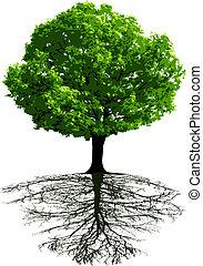 árboles, con, raíces