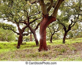 árboles, corcho
