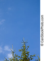 árboles, crecer, a, el, cielo
