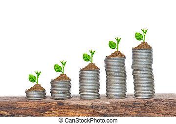 árboles, crecer, en, un, secuencia, de, germinación, en, pilas, de, coins