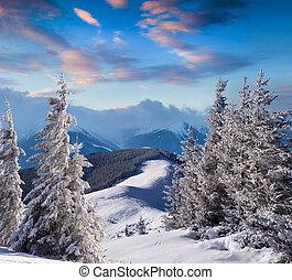 árboles, cubierto, con, escarcha, y, nieve, en, montañas
