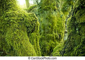 árboles, cubierto, en, verde, musgo