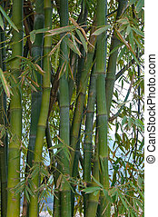 árboles de bambú