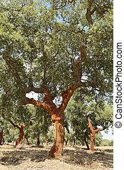 árboles de corcho