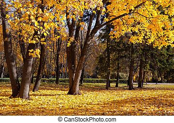árboles de otoño, en el parque