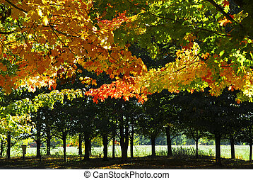 árboles de otoño, en, otoño, parque