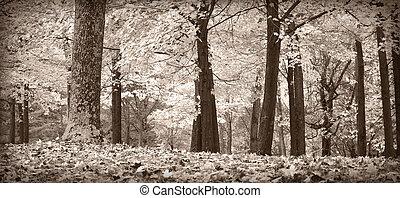 árboles de otoño, negro y blanco