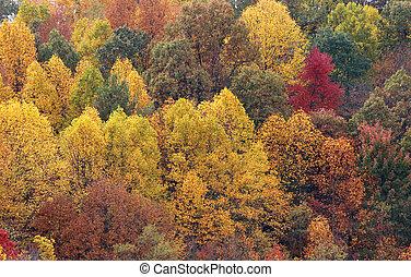 árboles de otoño, plano de fondo