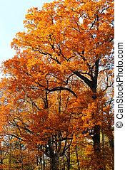 árboles de otoño