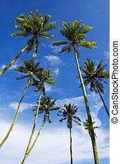 árboles de palma, contra, cielo azul