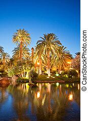 árboles de palma, durante, ocaso