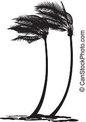 árboles de palma, en el viento