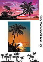 árboles de palma, en, ocaso