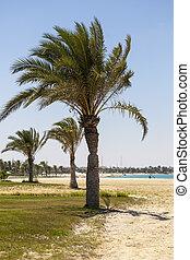 árboles de palma, en, un, playa