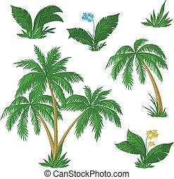 árboles de palma, flores, y, pasto o césped